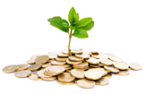 Seedling and pile of coins photo